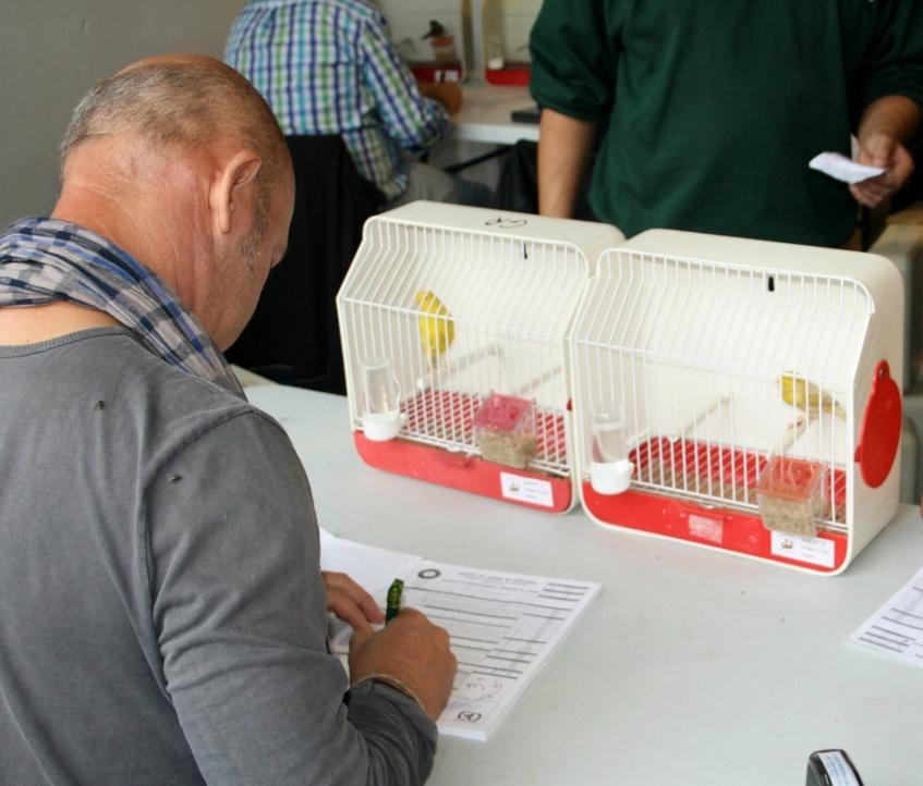 El III Concurso Ornitológico »Ciudad de Sevilla» abre sus puertas el miércoles con un millar de ejemplares