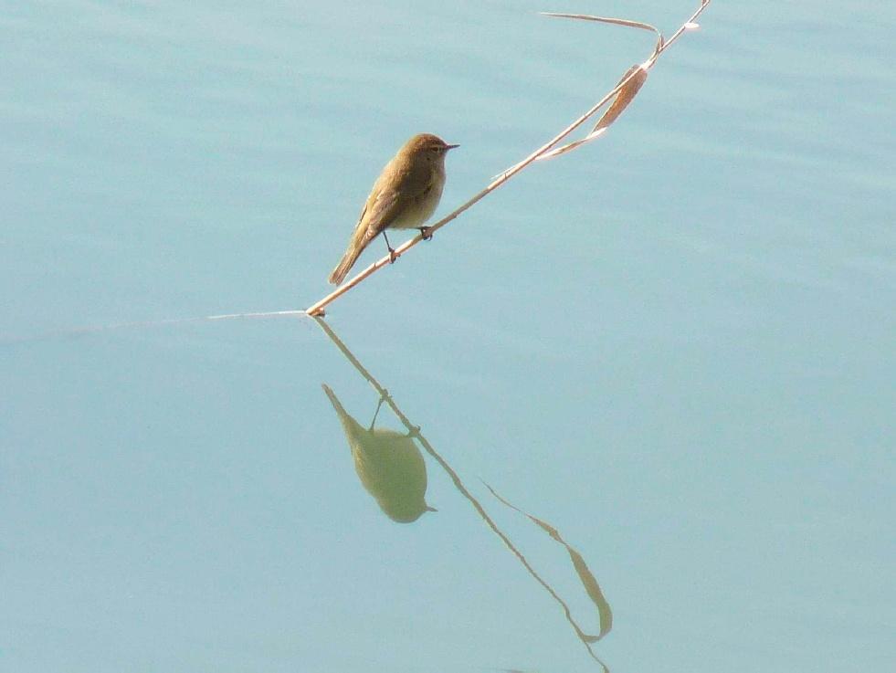 SEO/BirdLife inicia cursos y jornadas sobre turismo ornitológico en Extremadura, C-LM y Canarias