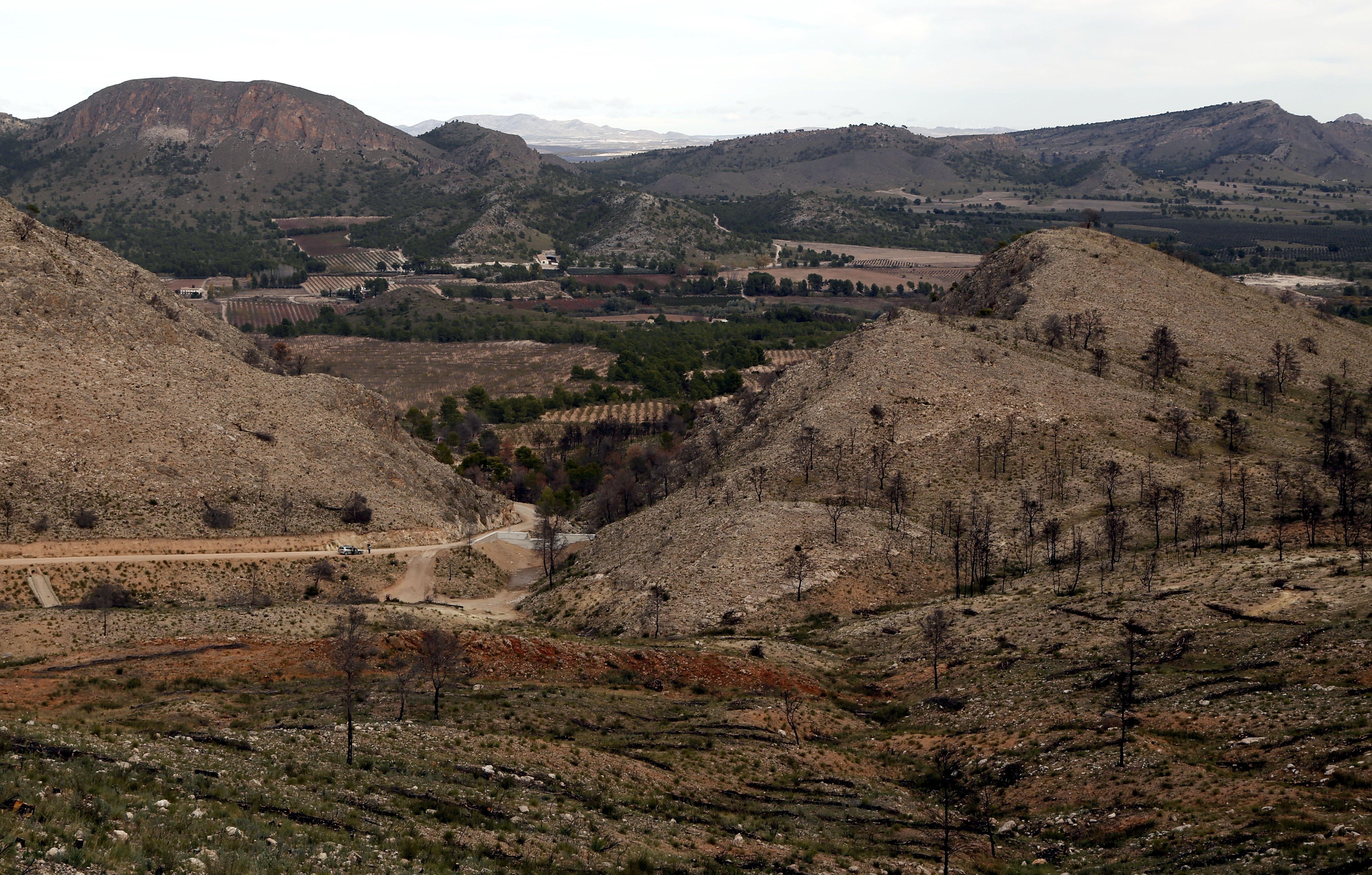 La restauración de la zona afectada por el incendio de Hellín el pasado año ha costado 6,2 millones de euros