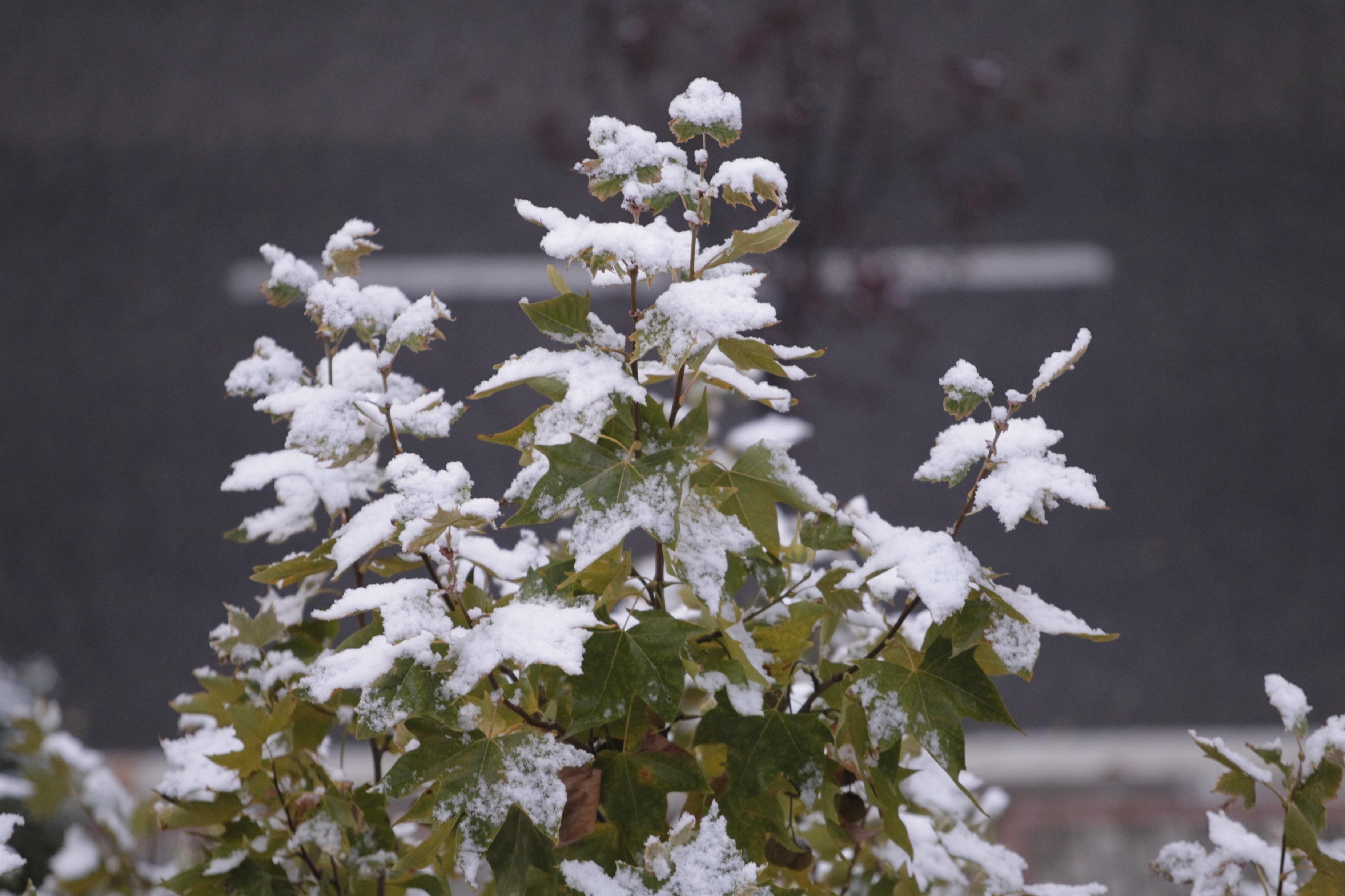 Almería, Cádiz, Huelva, Granada, Jaén y Málaga, en alerta este jueves por nevadas, viento y fenómenos costeros
