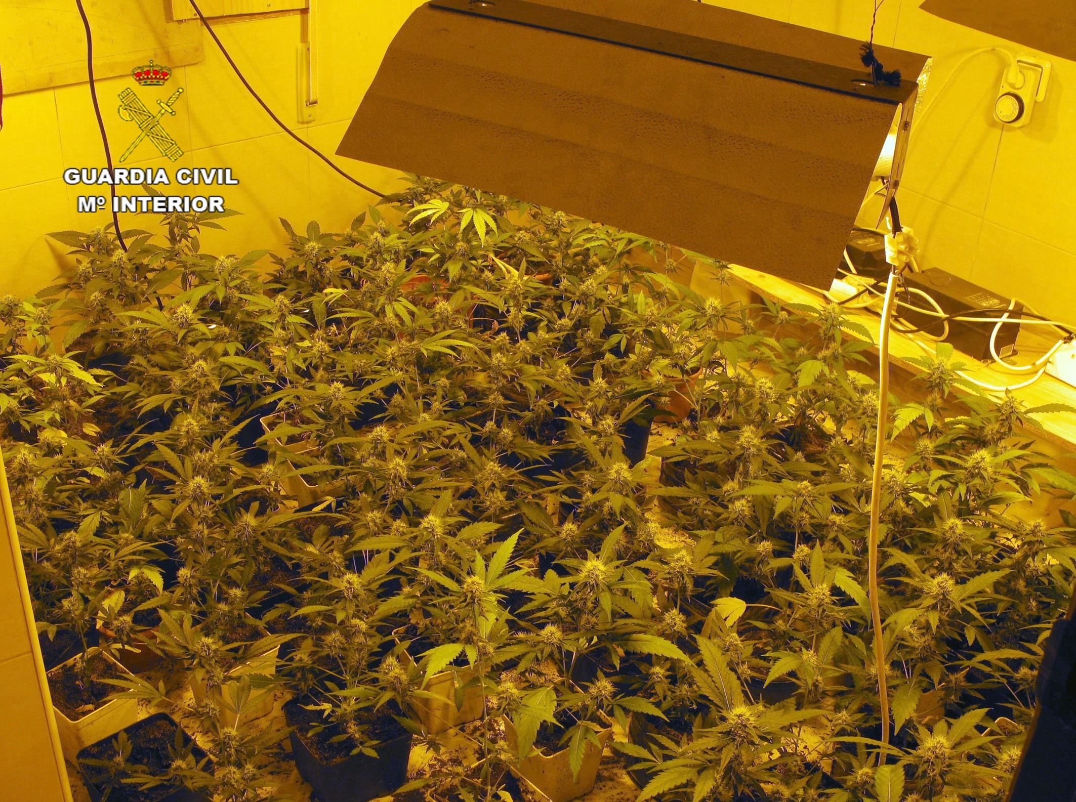 La Benemérita desmantela un invernadero clandestino de marihuana instalado en una vivienda usurpada