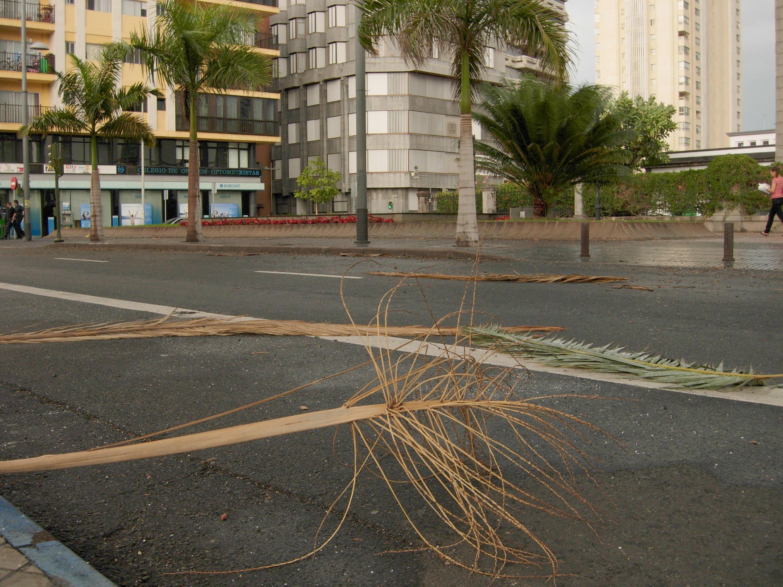 Barcelona activa la alerta del Plan Básico de Emergencia por el fuerte viento