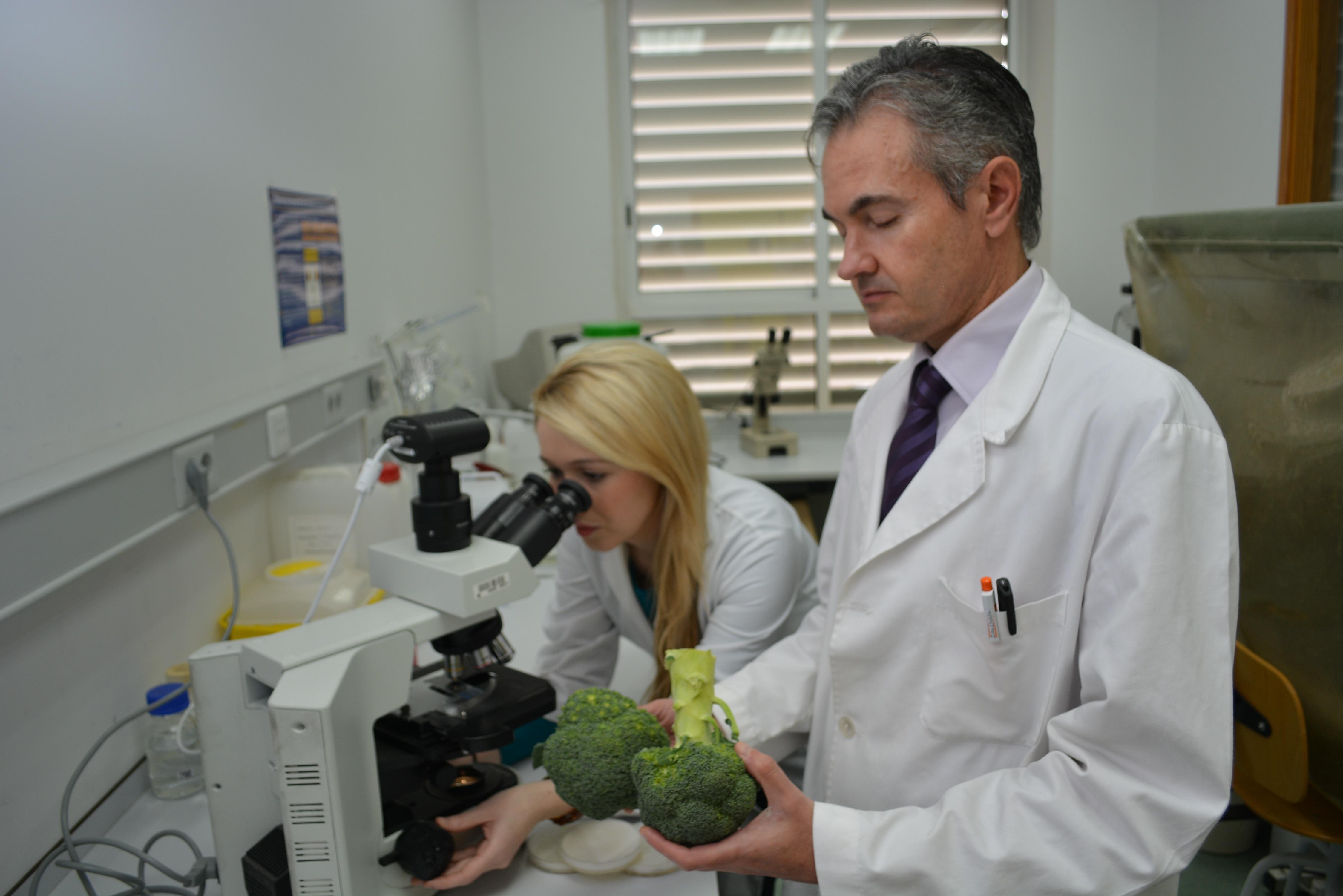 Agrónomos de la UPCT indagarán en la enfermedad de médula blanda del brócoli