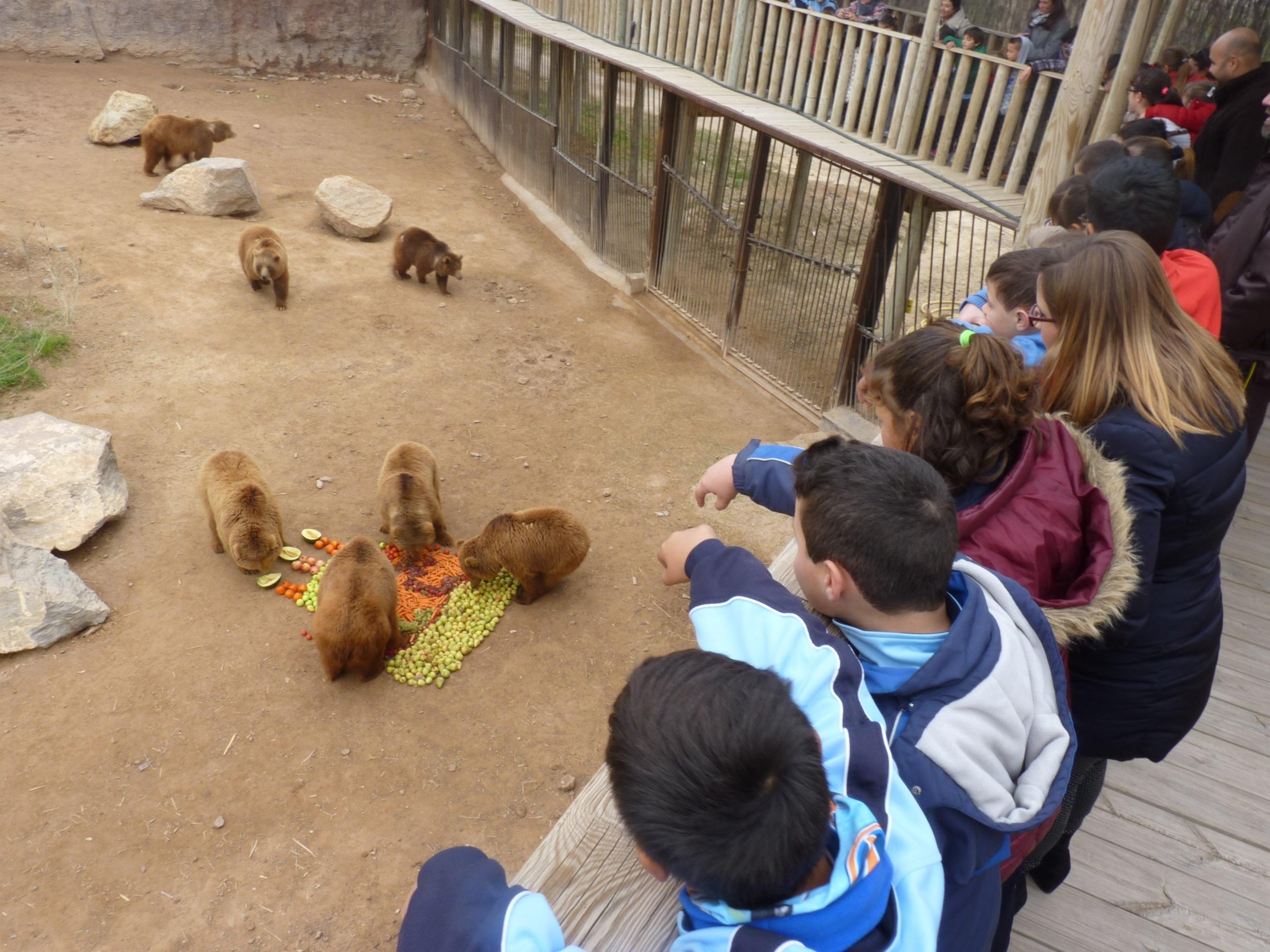 La osa Fabila del Parque Terra Natura Murcia celebra su vigésimo segundo aniversario