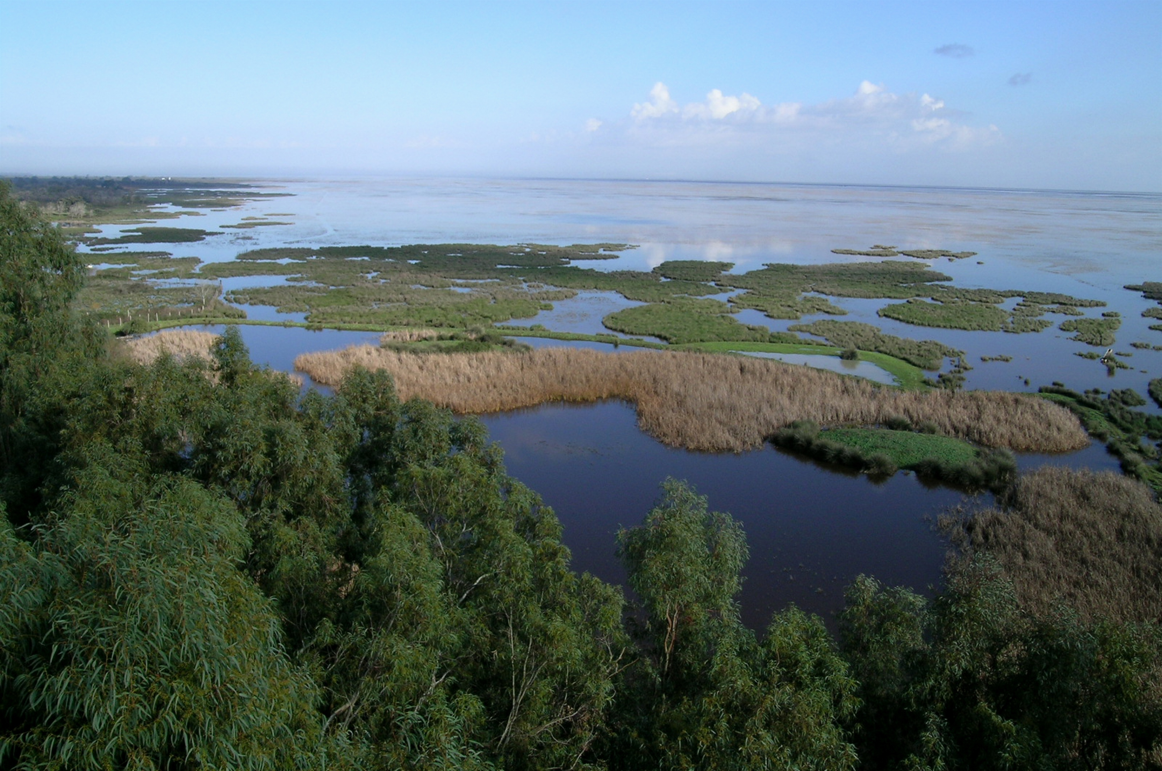 WWF lleva a la UNESCO, UICN y Convenio Ramsar la amenaza creciente sobre Doñana