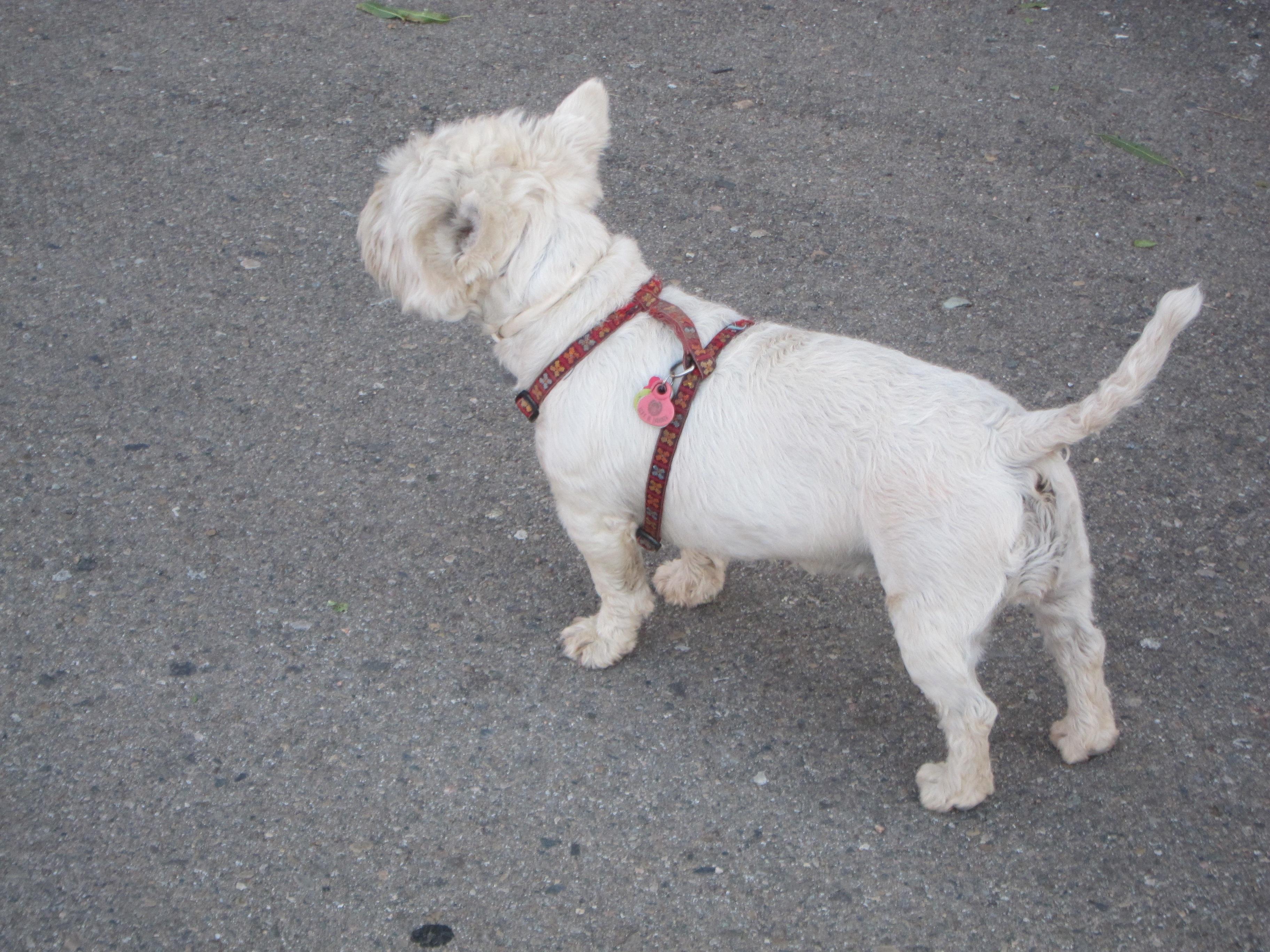 El Ayuntamiento de Binéfar lanza la campaña informativa »Ningún perro sin chip»