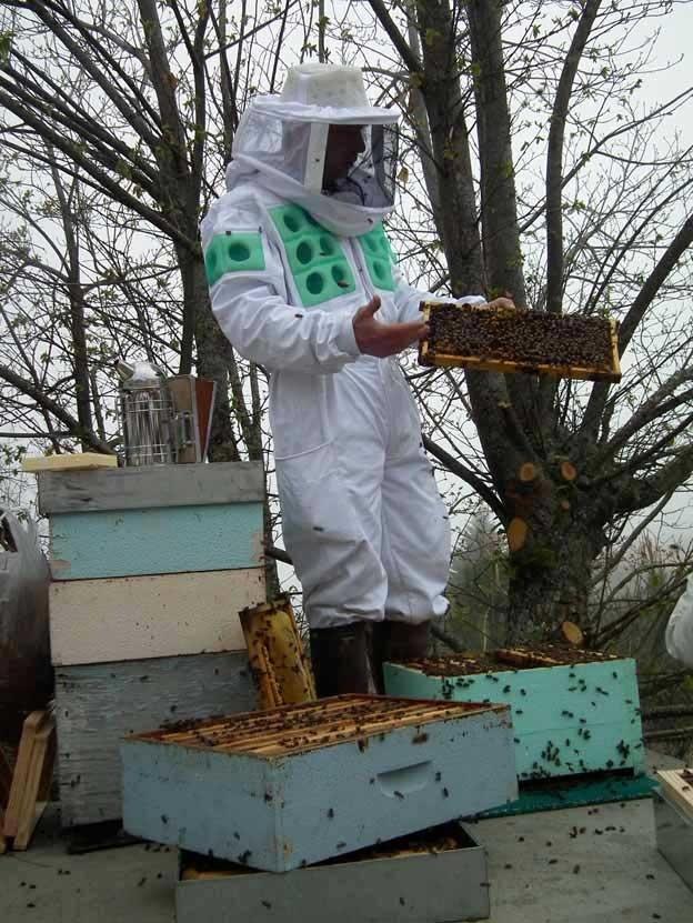 Expertos en apicultura debatirán sobre técnicas de producción que mejoren la rentabilidad de las colmenas