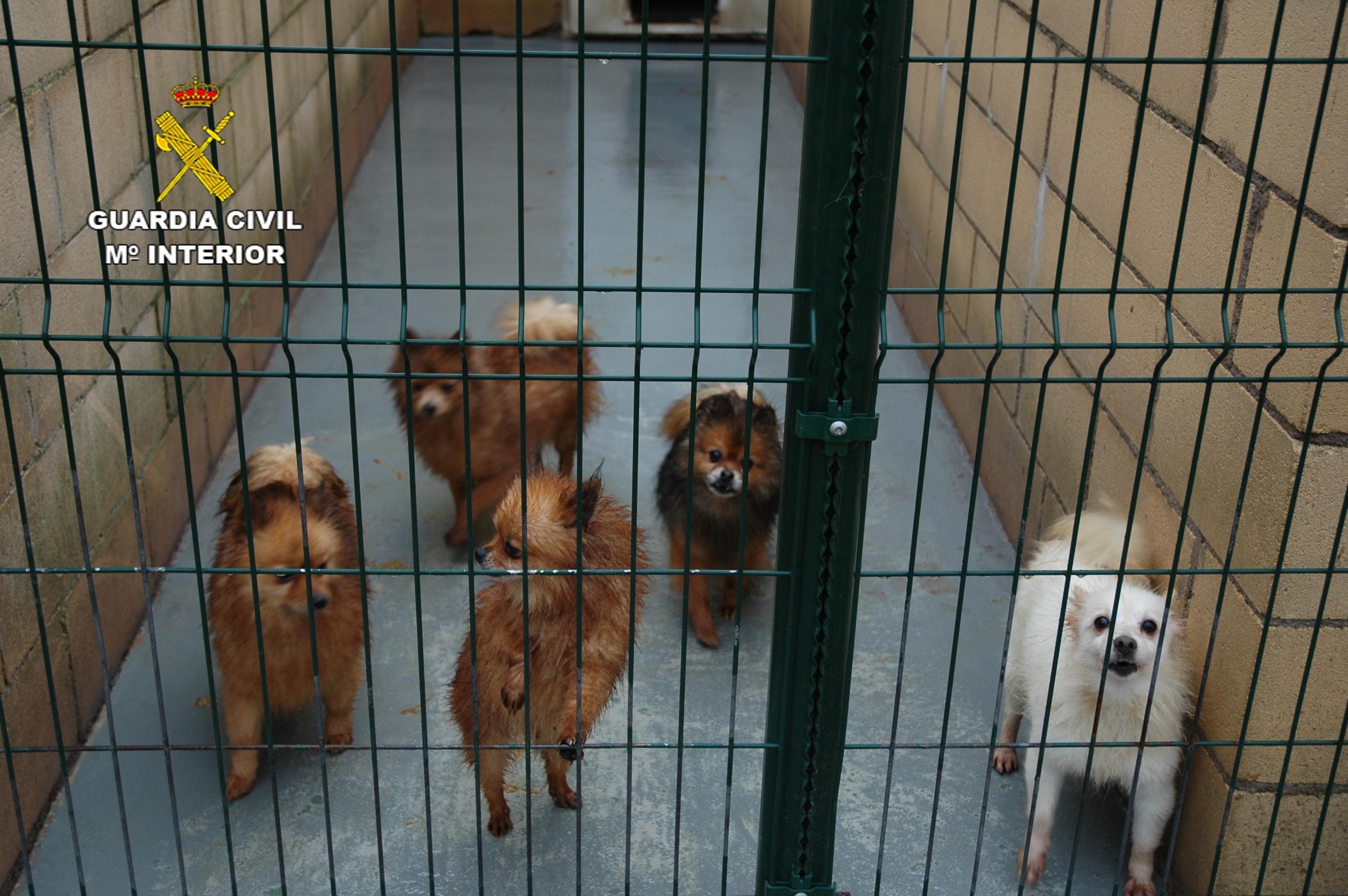 Guardia Civil interviene cerca de 600 animales de compañía que habrían sido introducidos en el país de forma irregular