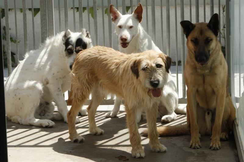 Retiran un total de 144 animales vagabundos de las calles de la capital en 2013, entre perros, gatos y aves