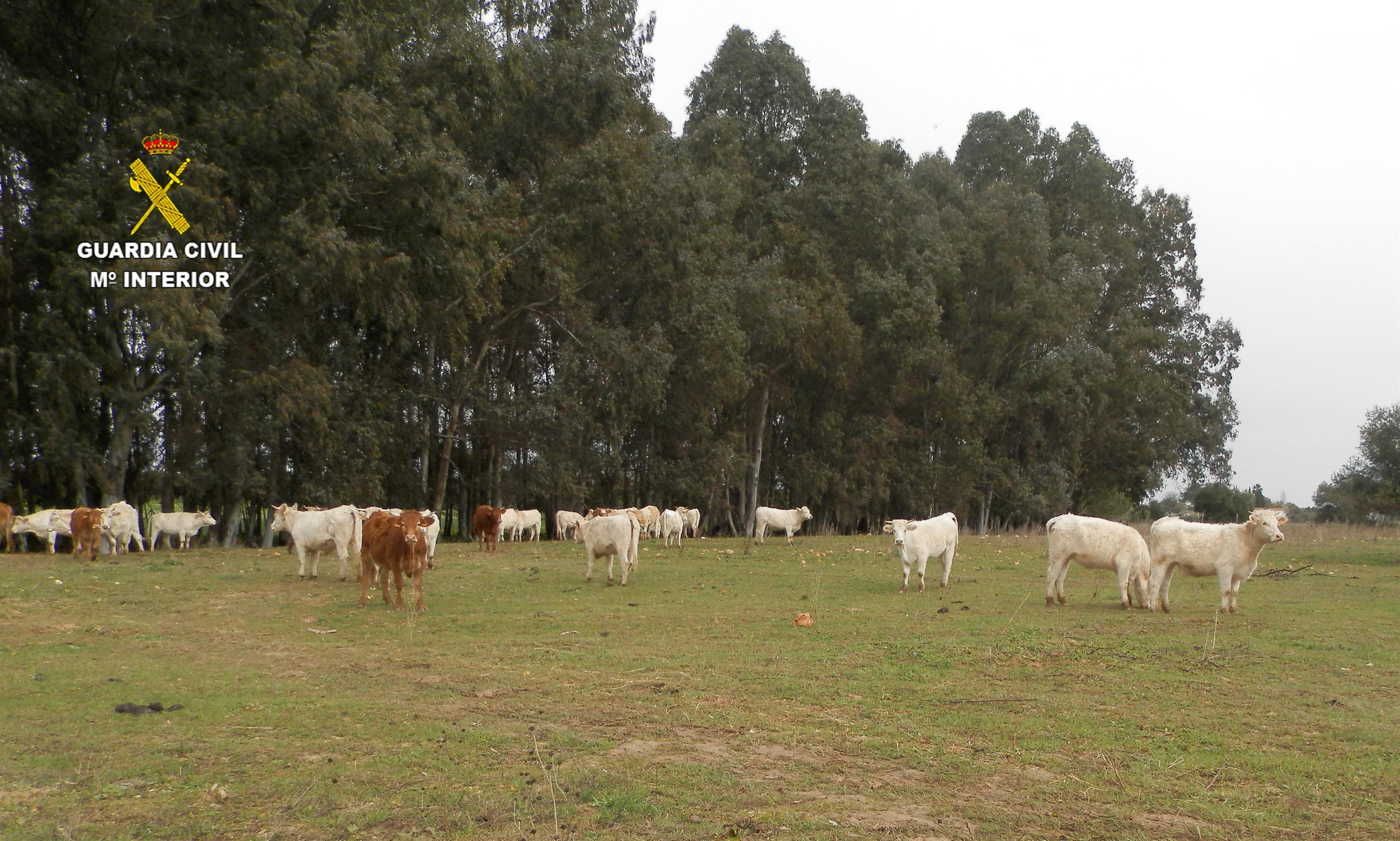 Un detenido en Utrera por presunta estafa en un negocio de compra-venta de ganado adquirido en Cáceres