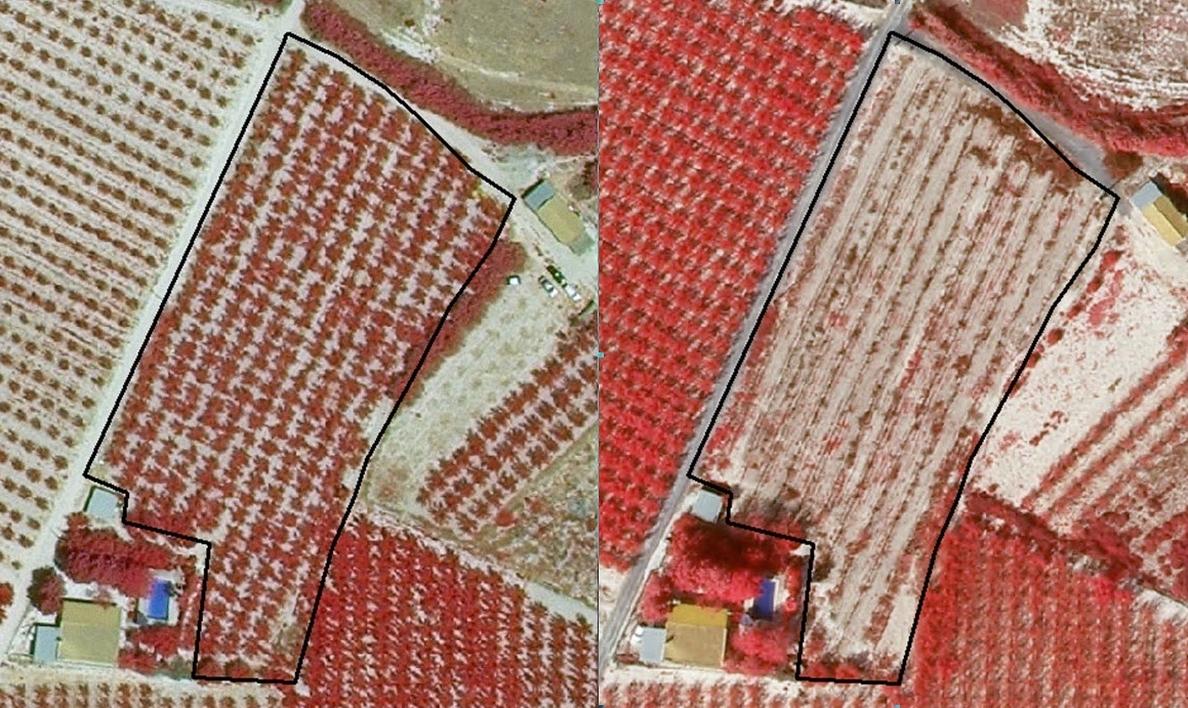 Agricultura completa la clasificación de la superficie de cultivo de otros siete municipios