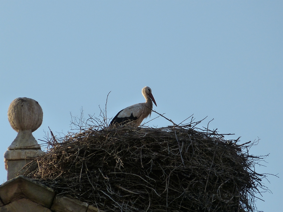 Amigos de la Tierra lamenta «la retirada» del nido de cigüeña del barrio de Varea