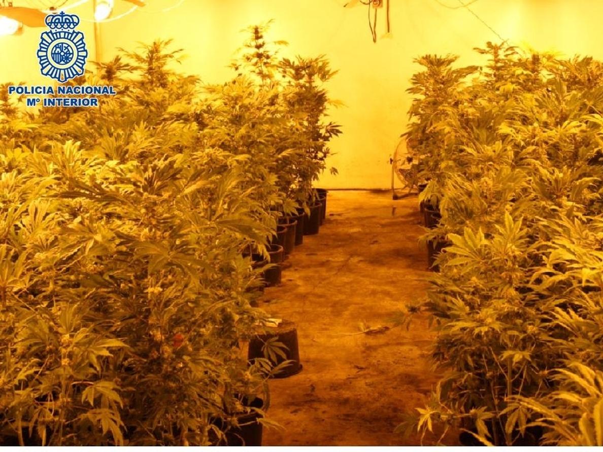 Desmantelada una nave industrial dedicada al cultivo de marihuana a gran escala en Peligros
