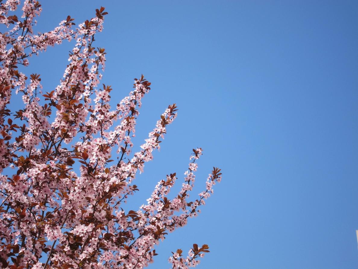 La actividad polínica registrará un «importante» aumento esta primavera debido a las lluvias invernales