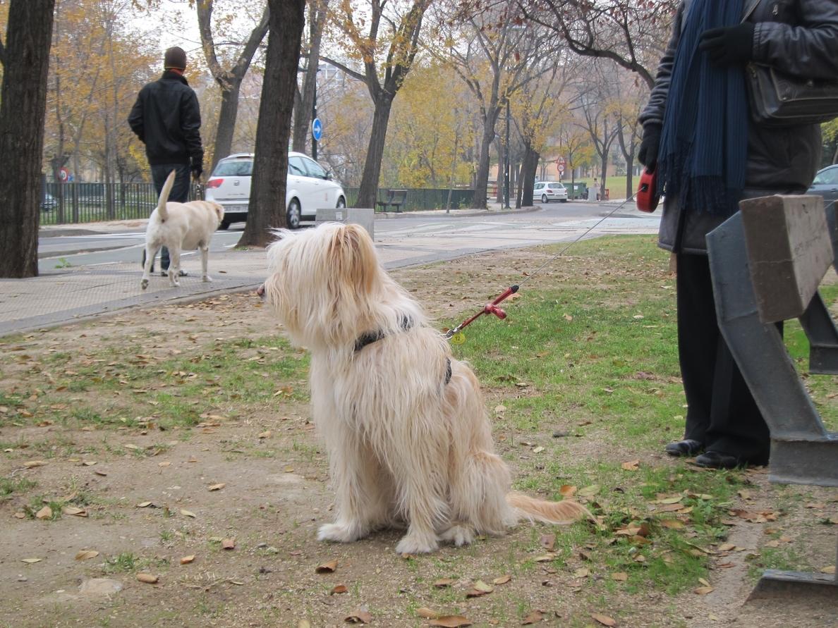El Ayuntamiento de Burgos estudia la construcción de zonas de esparcimiento para perros