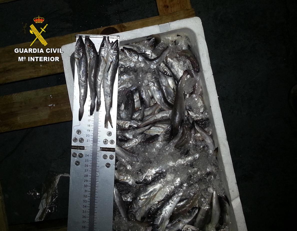 La Guardia Civil interviene 648 kilos de pescado inmaduro