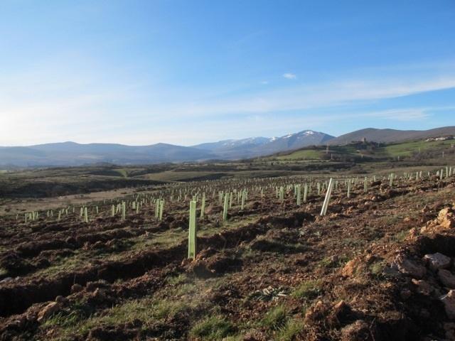 Bosques Sostenibles ha plantado más de 120.000 árboles en los dos últimos años