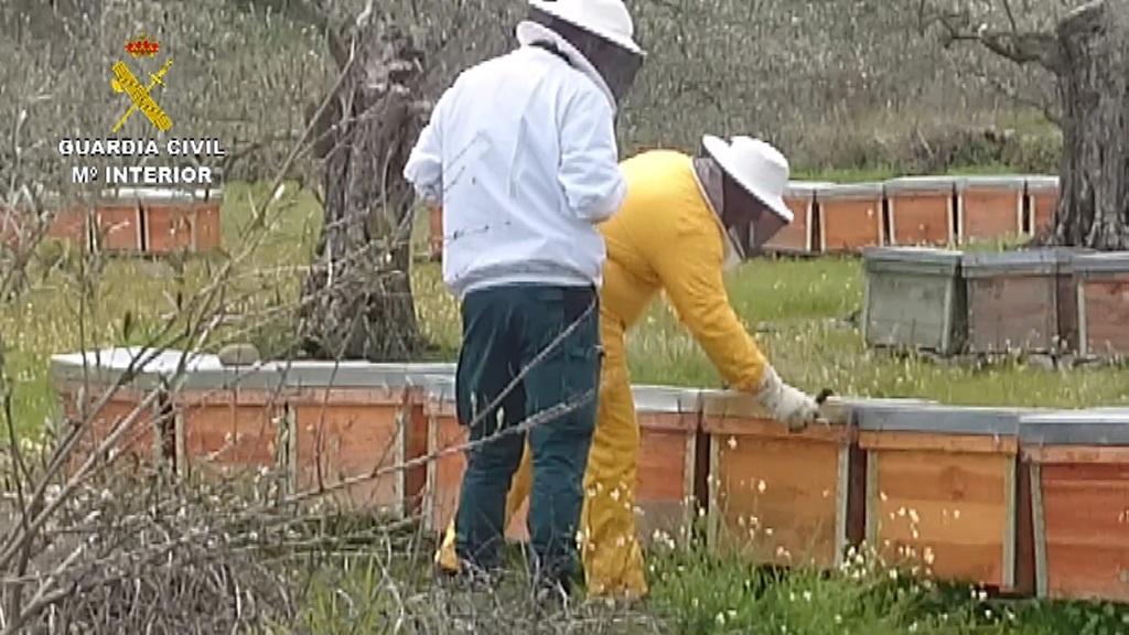 La Guardia Civil recupera en una explotación apícola de Casas del Monte 54 colmenas robadas