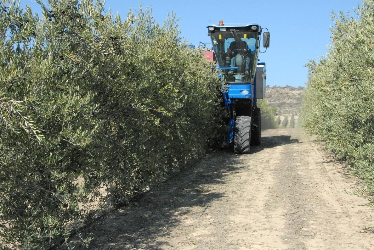 El CITA estudia el control de plagas de insectos en el olivar aragonés