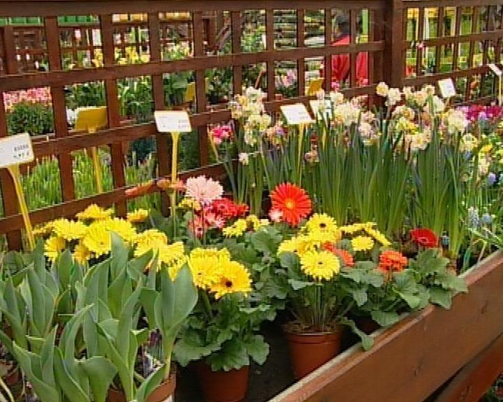 BNG reclama al Gobierno que reduzca el «abusivo» tipo de IVA de las flores y plantas ornamentales hasta el 8%