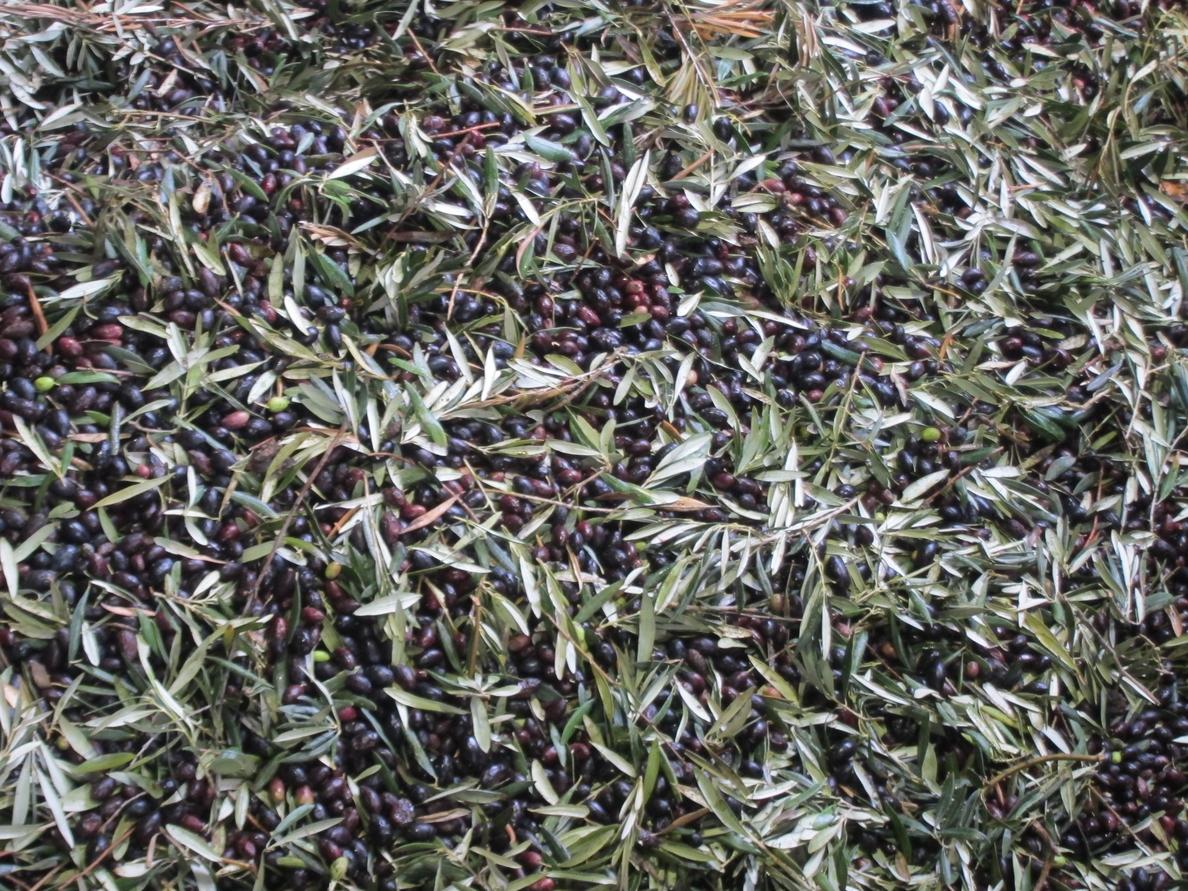 Cantabria, entre las comunidades autónomas donde más se consume aceite de oliva y oliva virgen