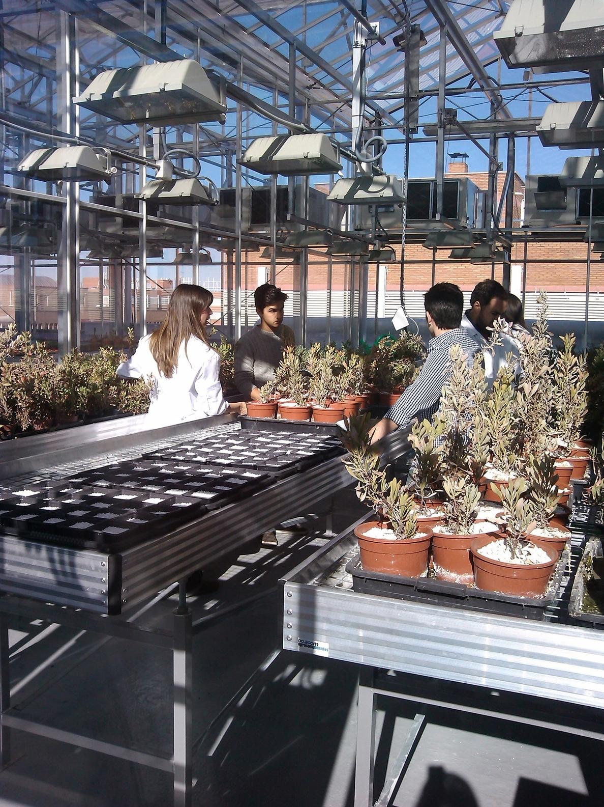 Investigadores de la US demuestran la conexión entre el metabolismo del carbono y la floración