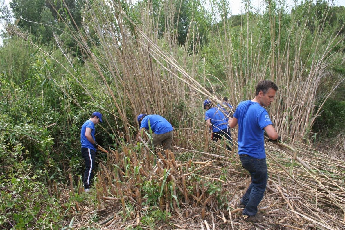 Un centenar de jóvenes participan en la retirada de cañas «invasoras» en el cauce del río Turia