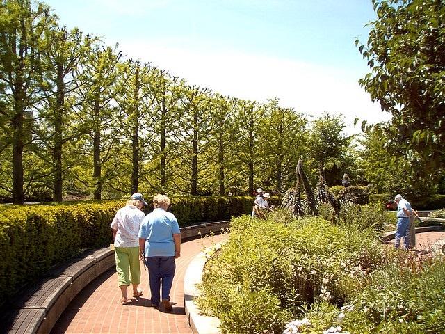 Huertos y jardines podrían ayudar en el cuidado de la demencia
