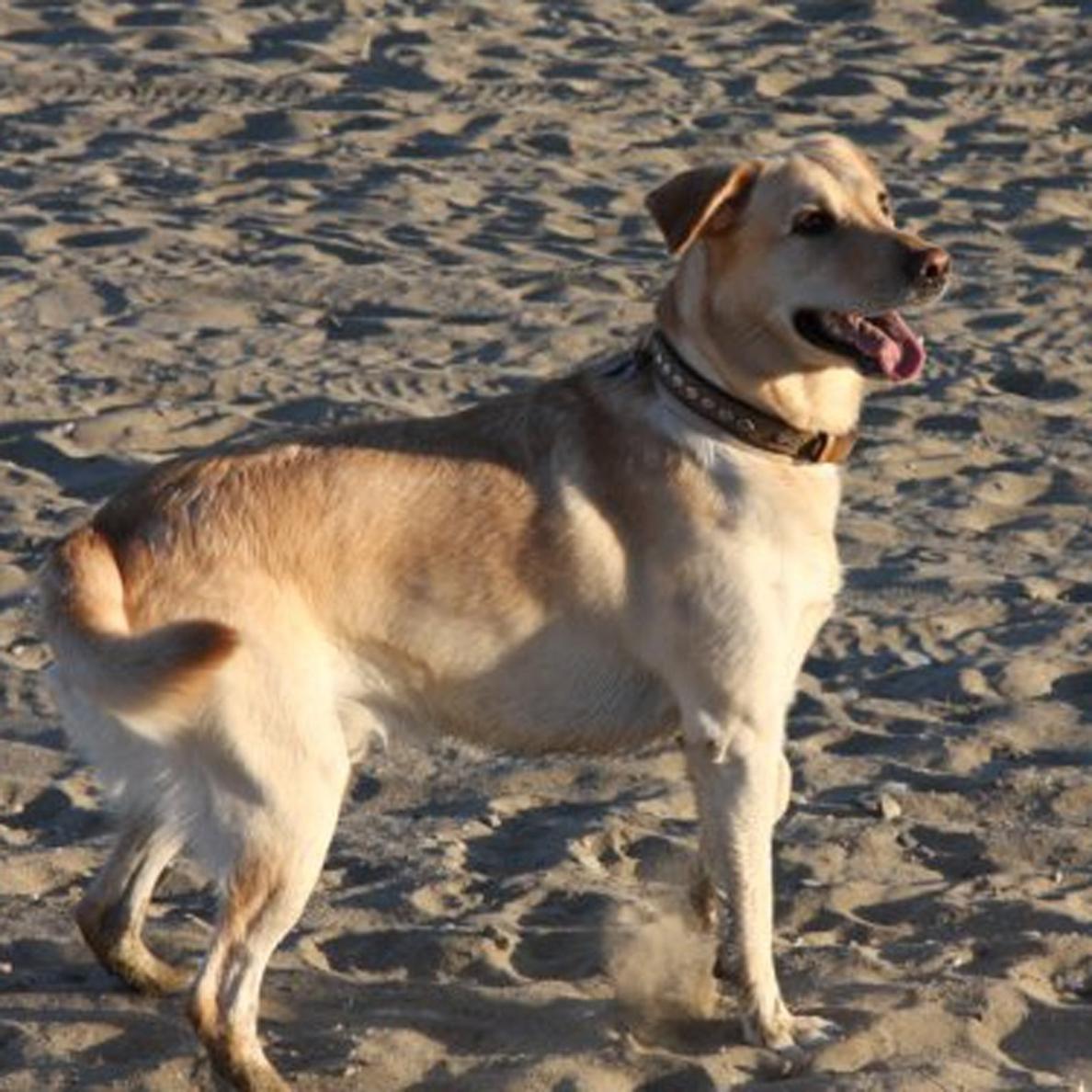 Alumnos de la UMU diseñan una aplicación móvil con información sobre todas las razas de perro conocidas