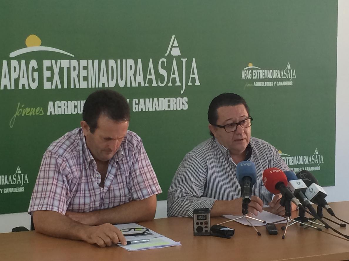Apag Extremadura critica que los viticultores entreguen la uva a las bodegas sin fijar condiciones de venta previamente