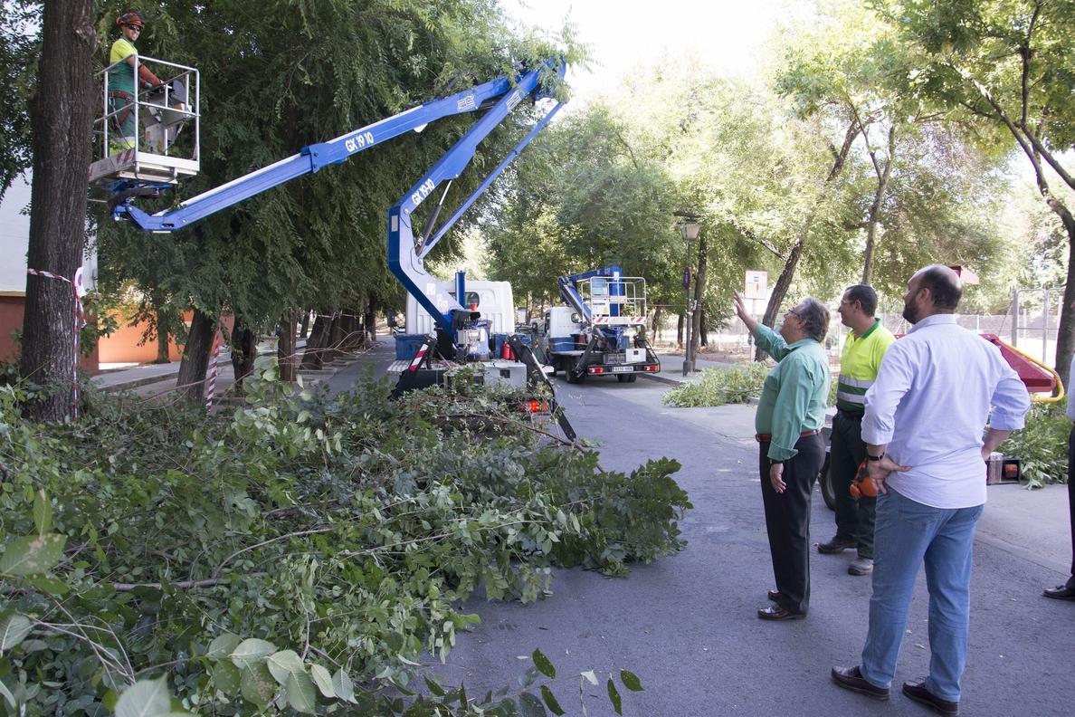 Más de 3.600 podas ejecutadas en el Distrito Triana, tras la intervención en la Barriada del Carmen