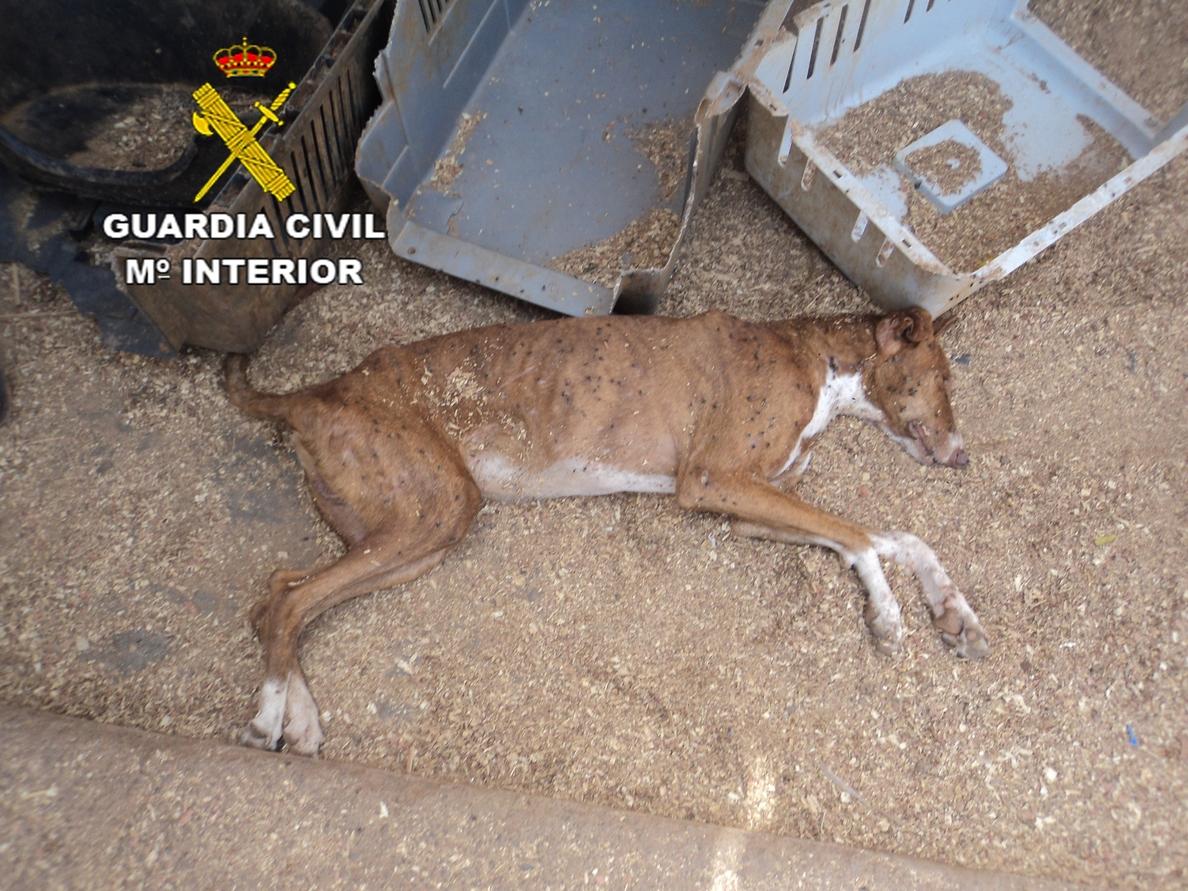 Imputan a la dueña de una protectora de animales en Fuerteventura por un delito de maltrato animal