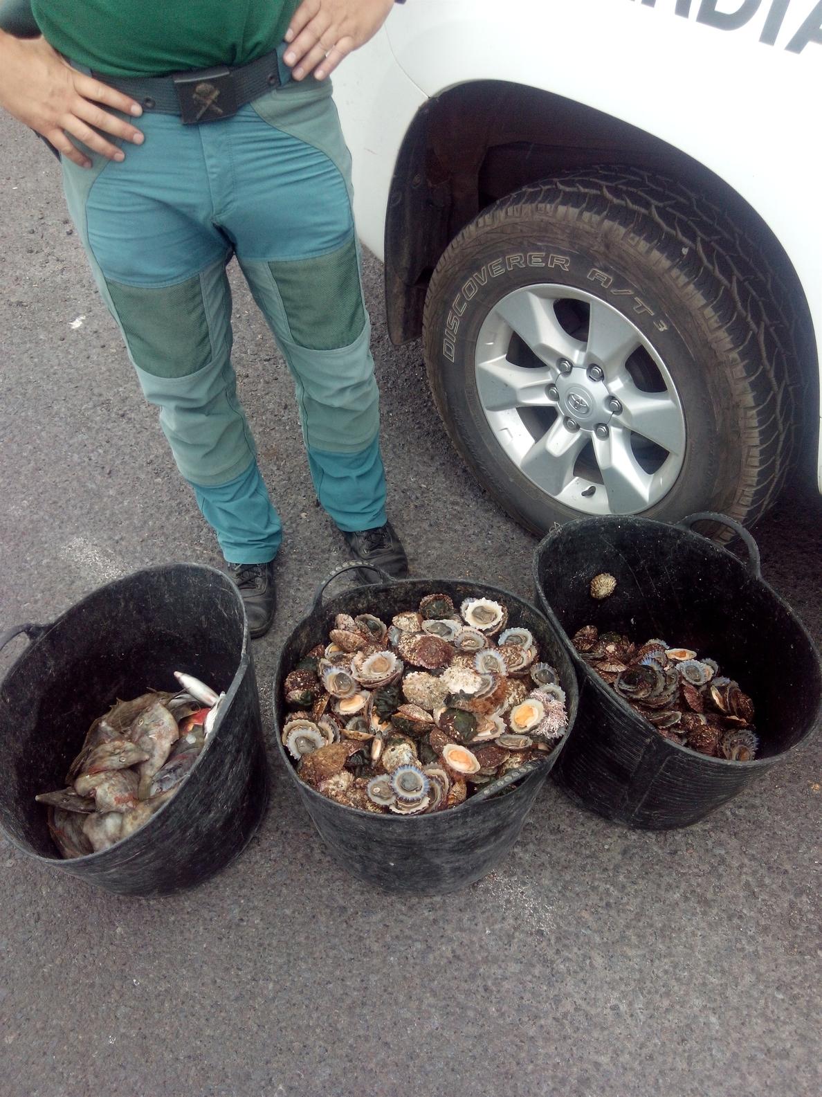 Incautan 40 kilos de lapas pescados ilegalmente en La Palma