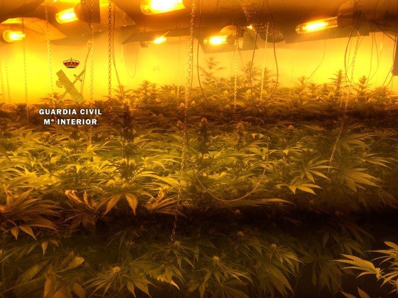 La Guardia Civil desactiva dos puntos de distribución de marihuana tras incautarse de más de 330 plantas