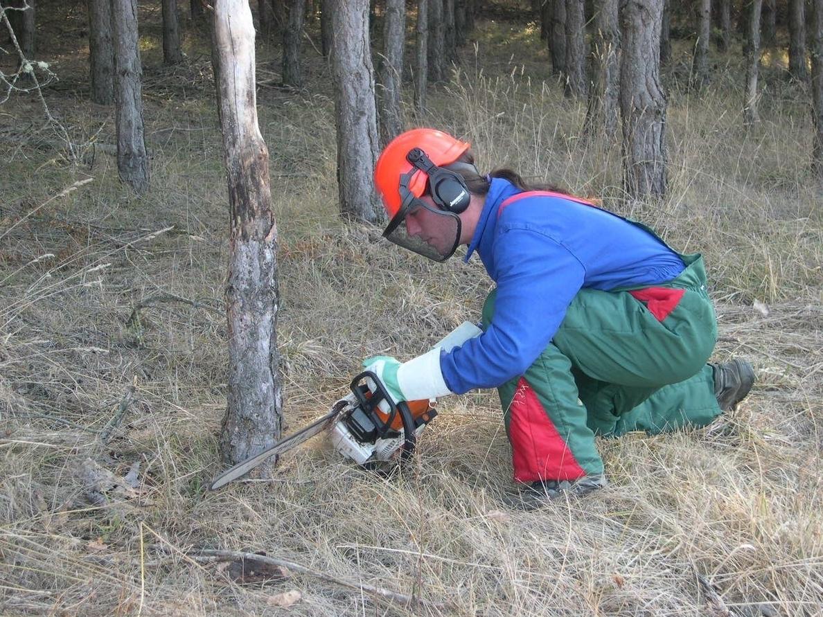 El IFA de Jaca trabajará en la ordenación forestal del Monte »El Boalar»