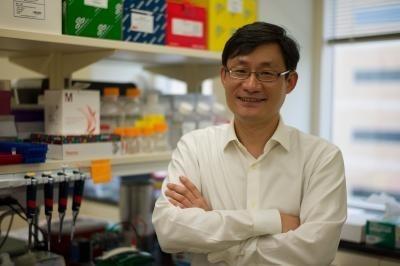 Una molécula del corazón recién descubierta podría conducir a un tratamiento eficaz para la insuficiencia cardiaca