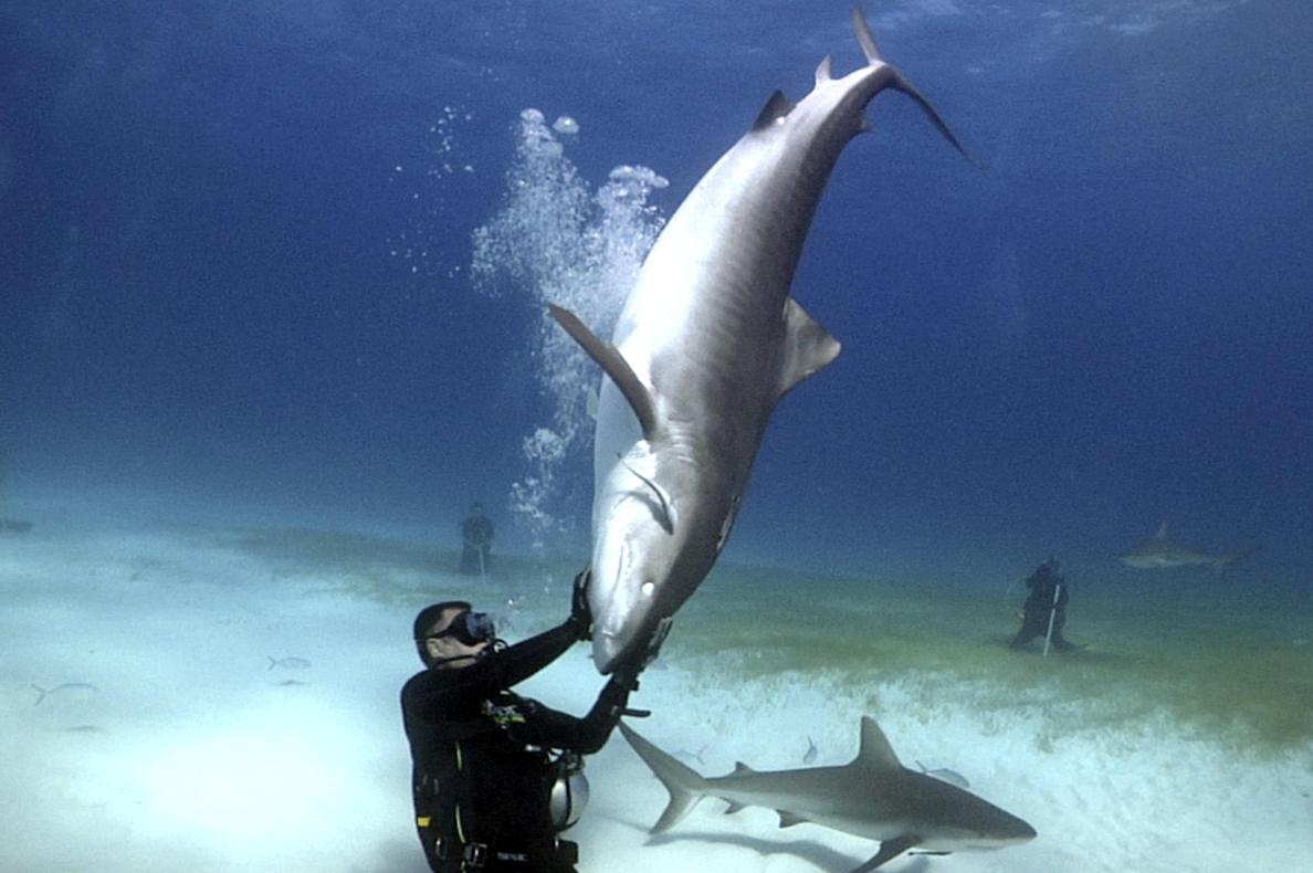 El madrileño Karlos Simón, el hombre capaz de convivir con tiburones