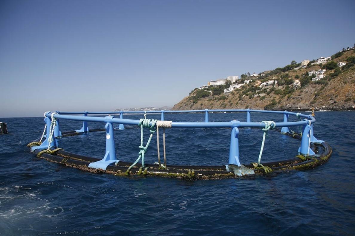 El Gobierno canario destina 2 millones de euros en ayudas a la acuicultura