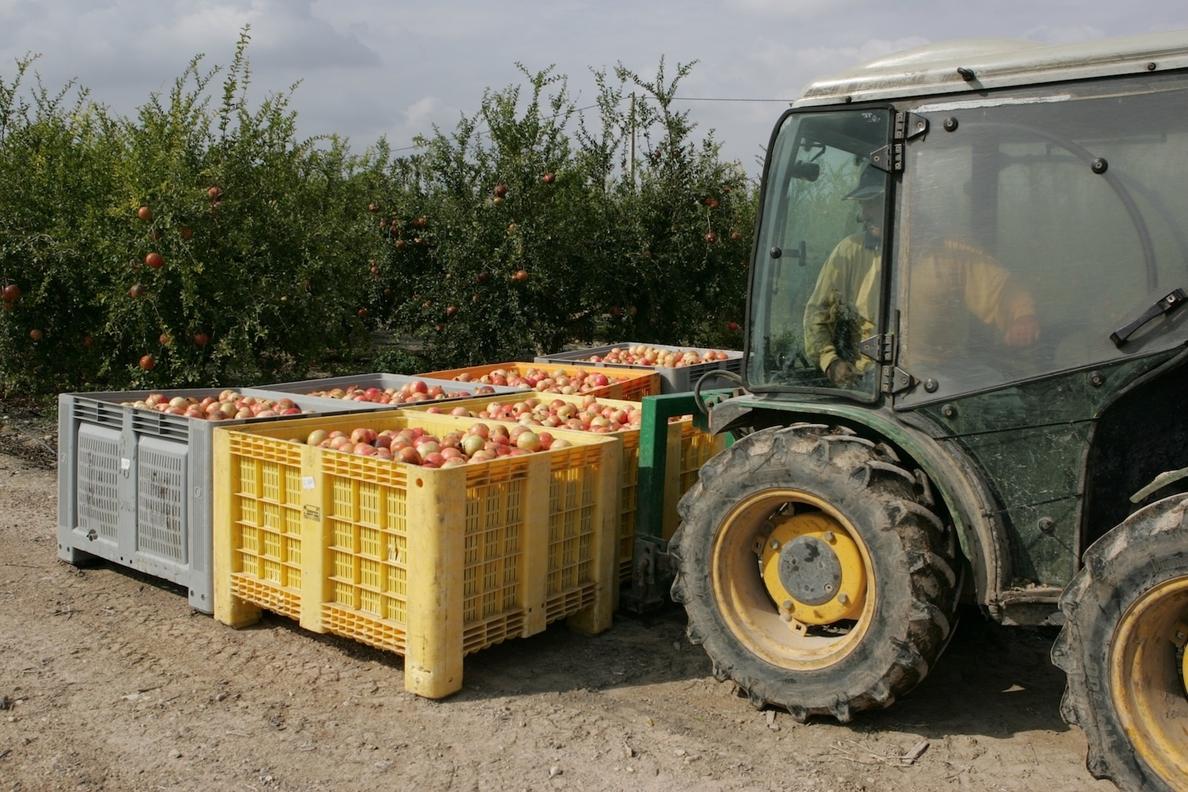 Los productores de granada mollar calculan que el 30% de exportaciones peligran por el veto ruso