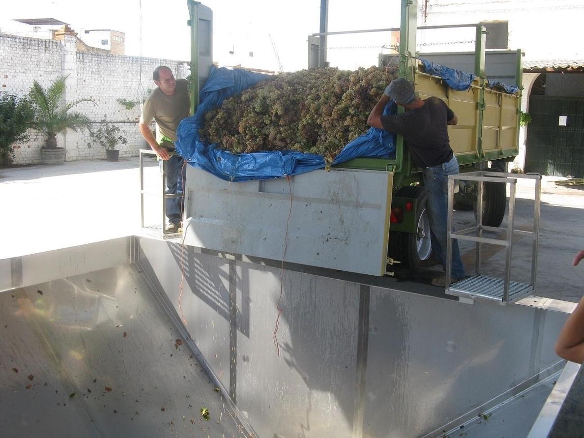 UPA critica que los precios de la uva en Extremadura esta campaña son «ruinosos»