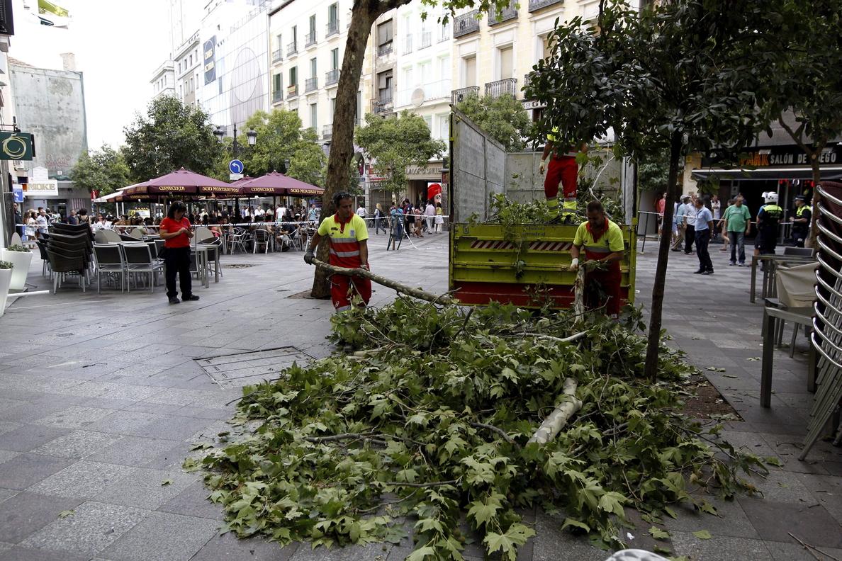 Al menos veinte árboles se han desplomado en 2014  más allá de la capital de España