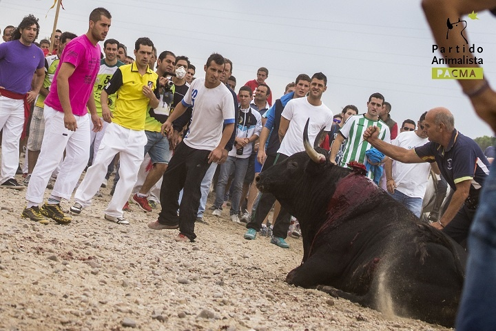 Díaz dice que no le gustaron las imágenes del Toro de la Vega y apuesta por revisar las tradiciones
