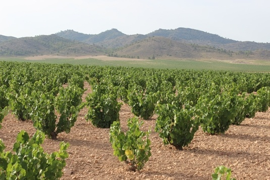 El consumo de vino en los hogares españoles cae en volumen un 6,7% hasta julio
