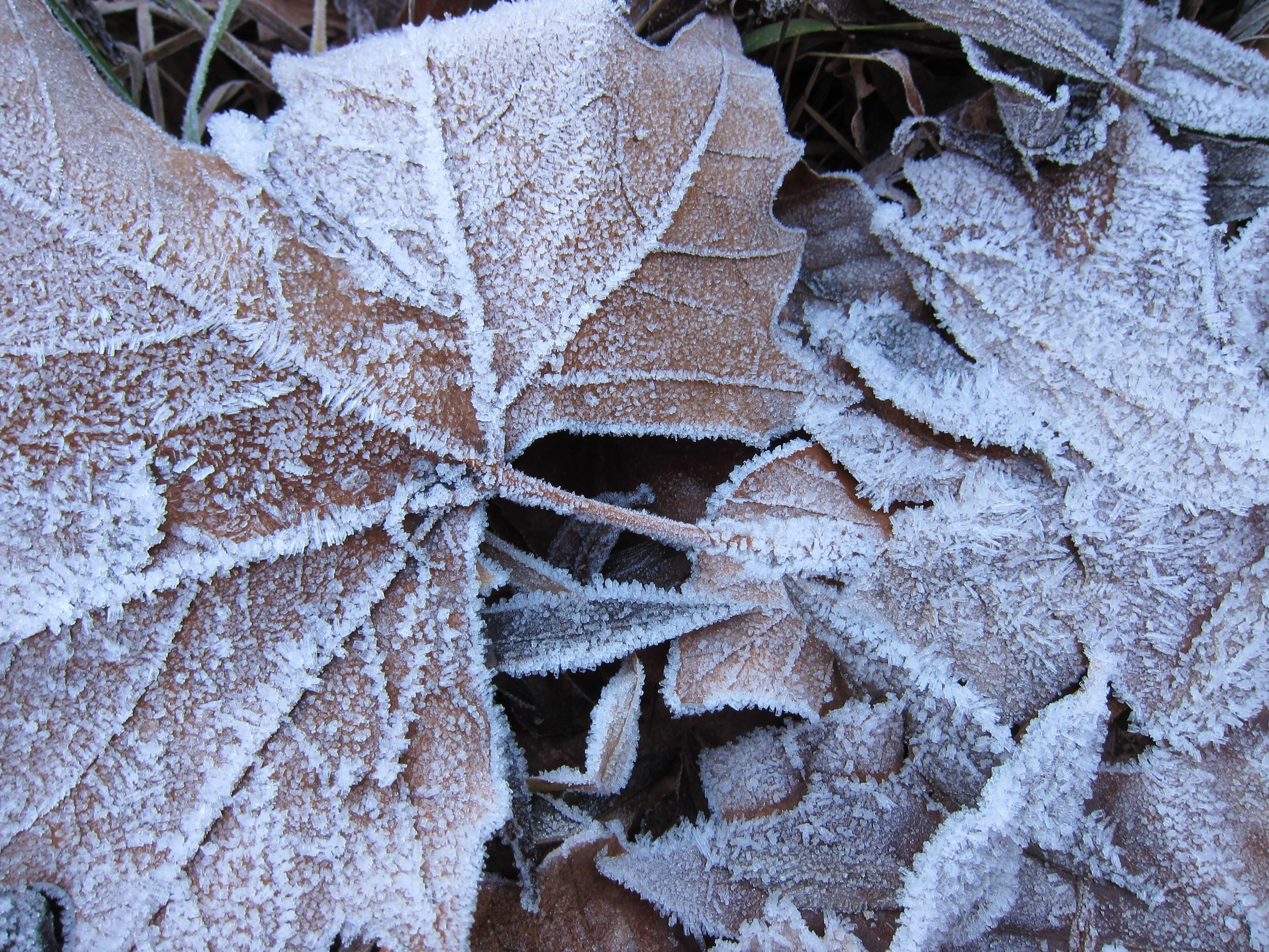 León ha sido el lugar más frío de lo que llevamos de otoño
