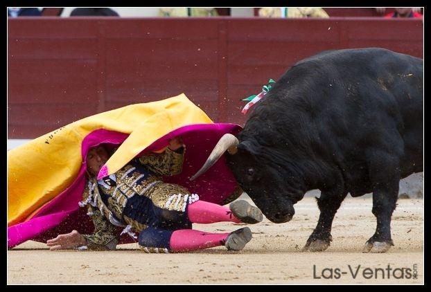 Parlamentarios animalistas premian a »Eldiario.es» y Veterinarios contra la tauromaquia (AVATMA) por su defensa animal