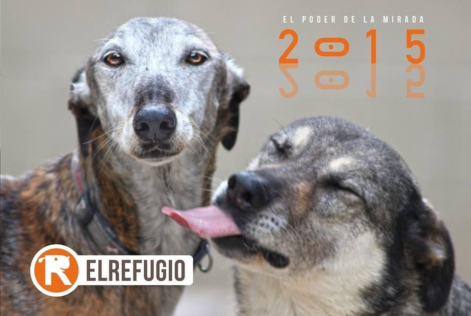 El Refugio presentará el martes la exposición »El poder de la mirada» en el Círculo de Bellas Artes