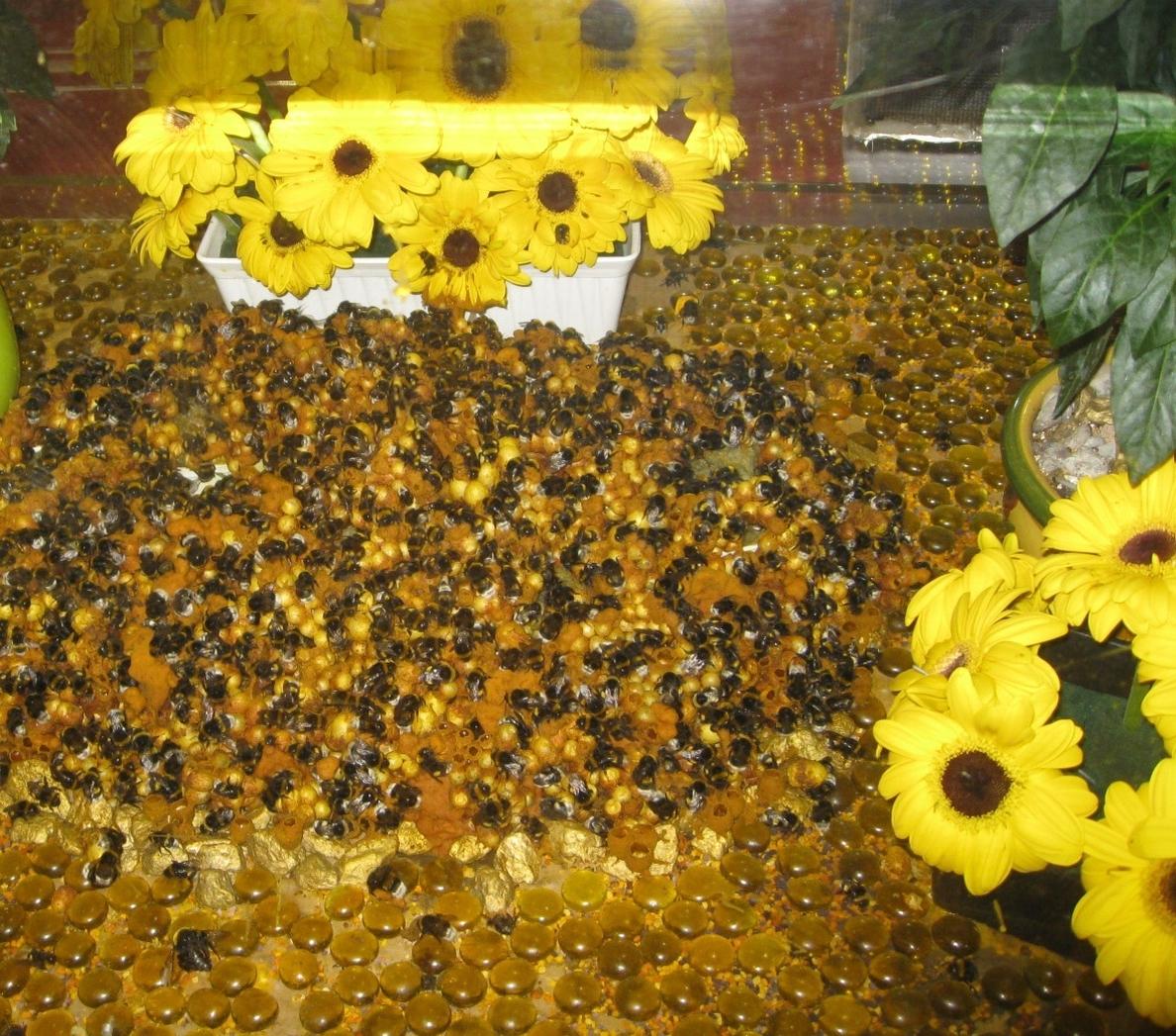 UPyD emplaza al Gobierno a garantizar controles sanitarios ante la miel procedente de China