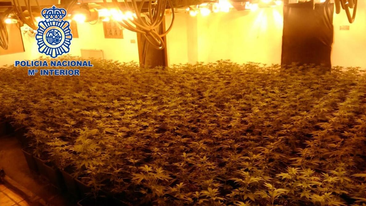 Tres detenidos por cultivar 1.299 plantas de marihuana en un chalet y manipular la electricidad