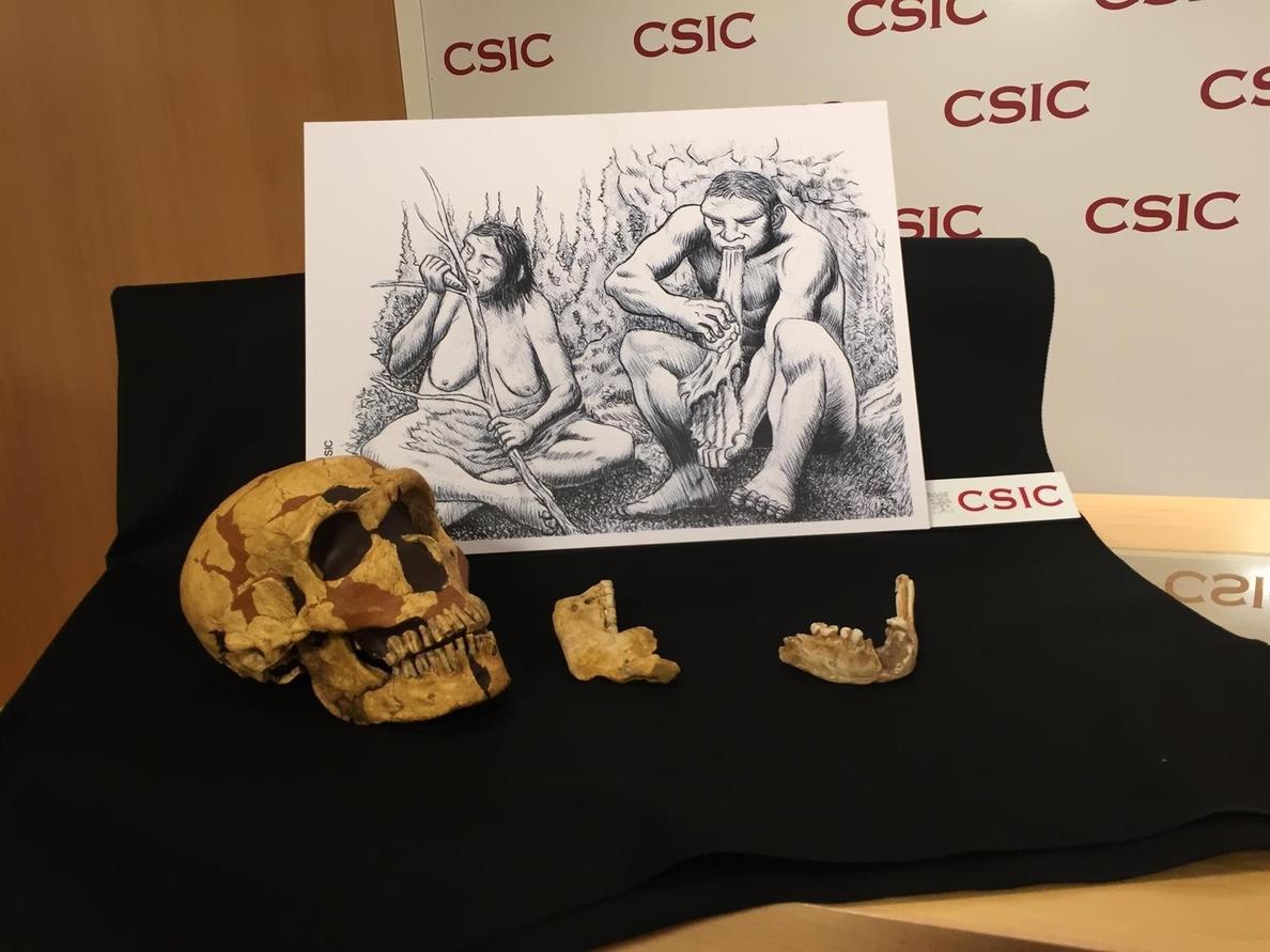 Los neandertales de la cueva del Sidrón dividían por sexo algunas tareas