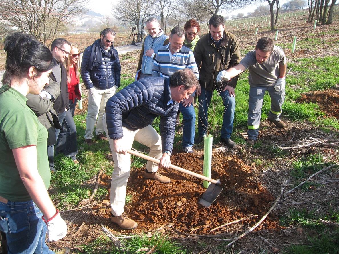 (AV) Feijóo ratifica que no hará los edificios que faltan del Gaiás tras plantar un abedul en el Bosque de Galicia